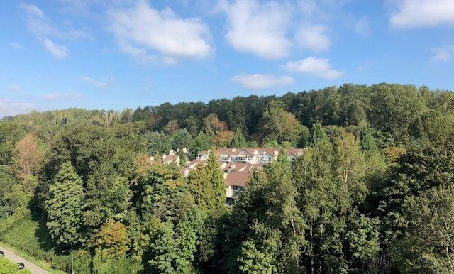view with trees